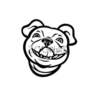 Head of Boston Terrier Breed of Dog Smiling and Licking His Nose Mascot Retro Style