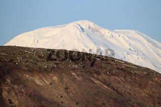 Mount St. Helens Explosionszone