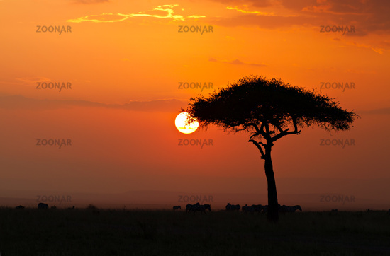 Sunset in the Masai Maria National Reserve