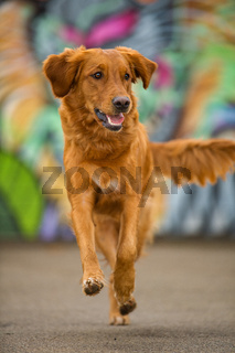 Brown mixed breed dog with colorful background