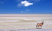 Oryx at the edge of the Etosha pan, Etosha National Park, Namibia