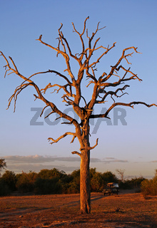 Landschaft im Chobe Nationalpark, Botswana; landscape at Chobe National Park, Botsuana