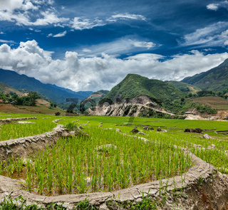 Rice field terraces (rice paddy). Near Cat Cat village