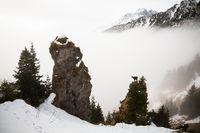 Tatra chamois climbing on mountains in winter mist