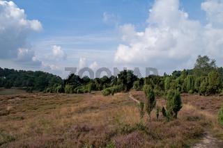 Westruper Heide bei Haltern am See, NRW, Deutschland