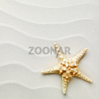sand background with shells and starfish
