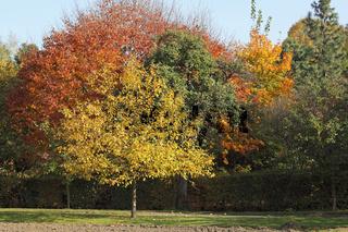 Herbstfarben am Rande der Stadt