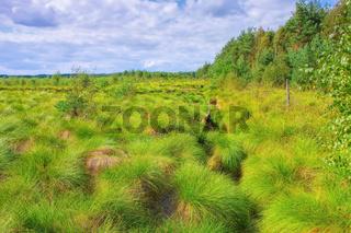 das Schweimker Moor grüne Natur Landschaft - the Schweimker swamp green nature landscape in Germany