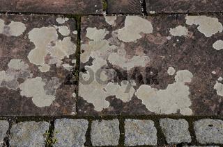 Krustenflechten auf Trittplatten aus Porphyr