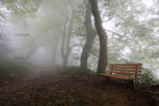 mountain trail and chair in fog