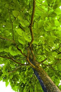Laub eines Baumes