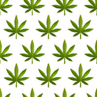 A lot of green realistic marijuana leafs, medical cannabis detailed icons on the white, seamless pattern