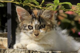 Portrait eines Kätzchens