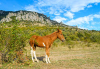 Autumn mountain landscape-a bay colt near a rosehip bush with red berries on a background of rocky stone mountains and a blue sky with white clouds on a sunny day