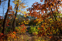 Autumn Forest Foliage