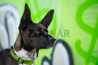 Cute mixed breed dog on colorful background