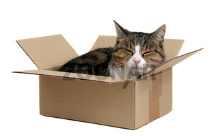 relaxing cute cat in box