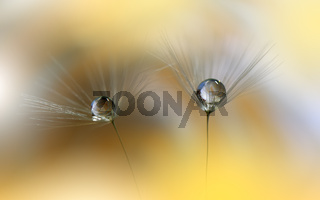 Beautiful Nature Background.Floral Art Design.Abstract Macro Photography.Pastel Flower.Dandelions.