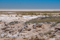 view of the dry Etosha salt pan at Etosha national park, Namibia