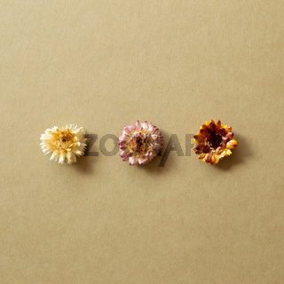 Dry flowers on brown background. top view, copy space