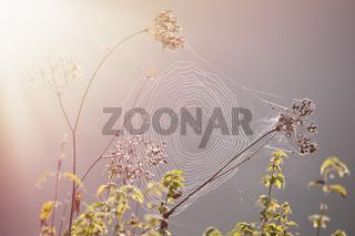 Close-up of a cobweb, spider web
