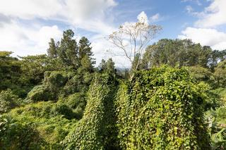 Panama Chiriqui province, Buena Vista dense tropical jungle