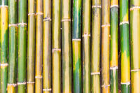 Green bamboo texture as background