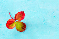 Colourful autumn leaf on a blue background with a place for text
