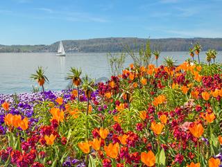 Blumenbeet, Überlingen am Bodensee