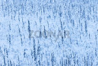 tiefverschneite Baeume, Muddus Nationalpark, Welterbe Laponia,  Lappland, Schweden