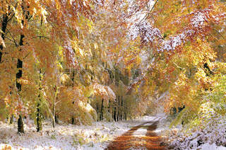Deutschland: Herbstwald mit Neuschnee