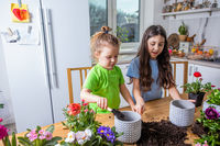 Little gardeners planting potted flowers it the kitchen