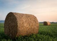 Hay bales in burgenland