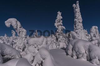 tiefverschneite Landschaft im Mondenschein, Gaellivare, Lappland, Schweden
