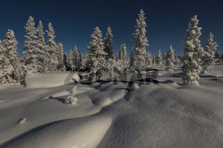 verschneite Landschaft im Mondenschein, Stubba Naturreservat, Welterbe Laponia, Lappland, Schweden