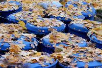 Herbstlaub auf Tonnen