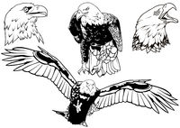 Black and White Set of Wild Bald Eagle