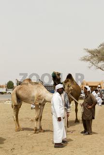 Abu Dhabi - Al Ain - Kamelmarkt