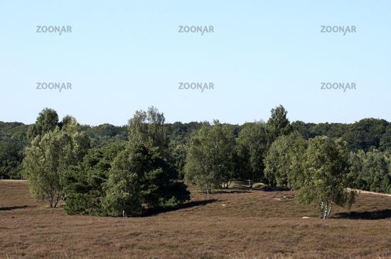 Heathlands, Westruper Heide, Haltern, Germany