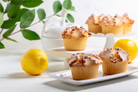 Traditional ricotta cheese and lemon cakes.