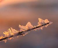 Winter morning