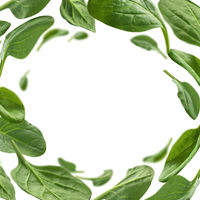 Green spinach leaves levitate on a white background