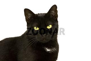 Katzenportrait 1