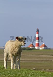 Schaf mit Leuchtturm Westerhever, Nordfriesland, Schleswig-Holstein, Deutschland