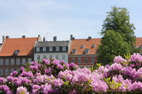 flowers in front of a row of houses