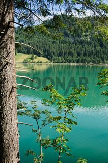 Baum am See mit türkis Wasser