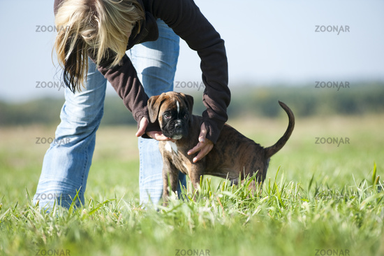 Woman bends over boxer puppy