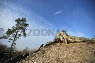 Landschaft Naturschutzgebiet Wahner Heide