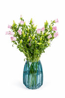 pink campanula champion in glass vase