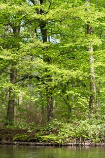 Tiergarten 005. Deutschland